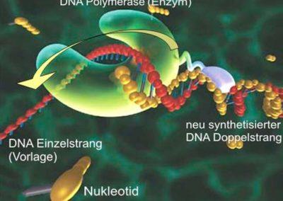 Was ist eigentlich ein PCR Test?